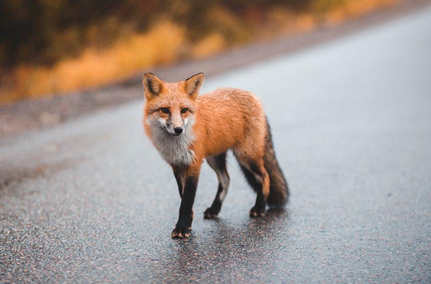KTOZ na ratunek dzikim zwierzętom